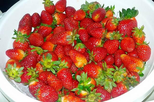 ثمار الفراولة